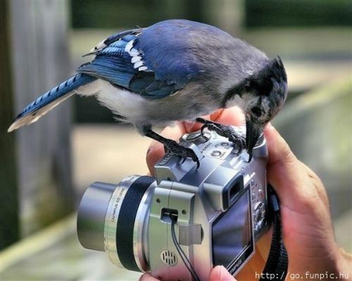 Bluebird on camera