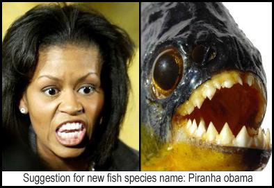 Piranha obama