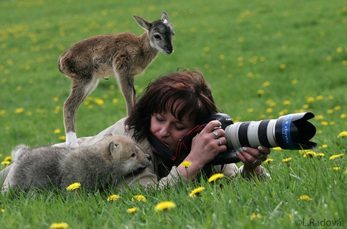 The challenges of wildlife photography