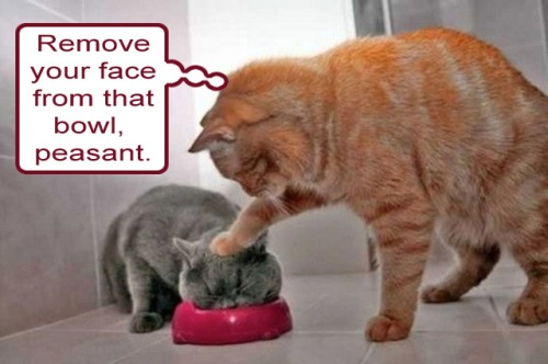 CAT bullying