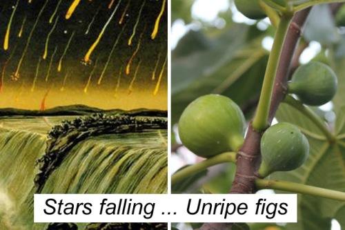 Stars falling v Unripe figs