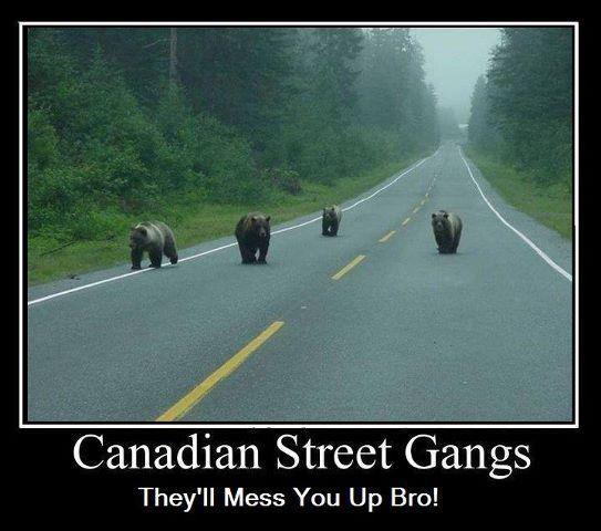 Street gangs in canada essay