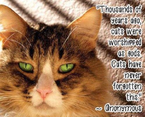 CAT worship