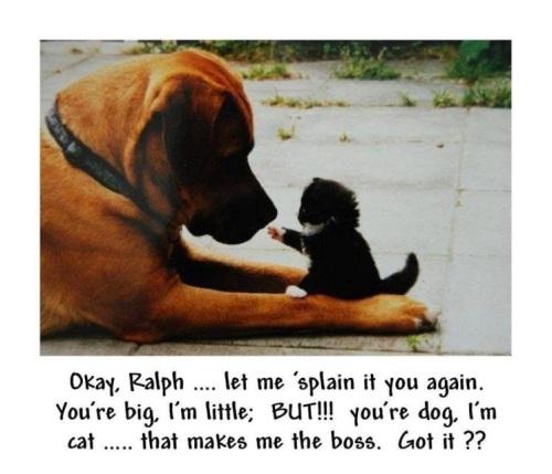 DOG CAT Big little