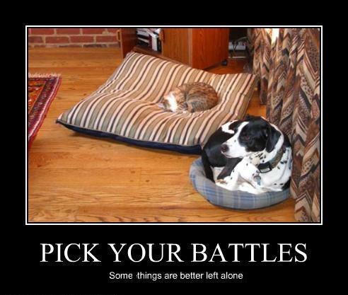DOG CAT pick your battles