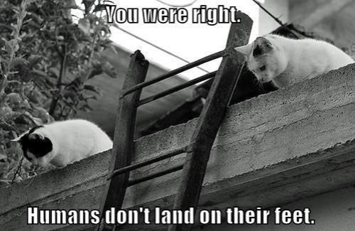 CAT Humans don't land on feet