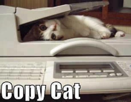 CAT Copy cat