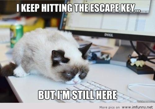 CAT escape key