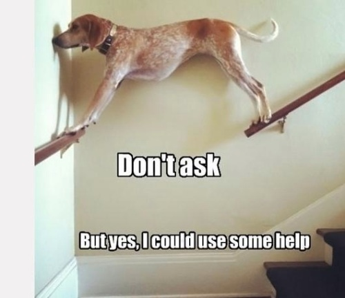 DOG Don't ask but yes I could use some help