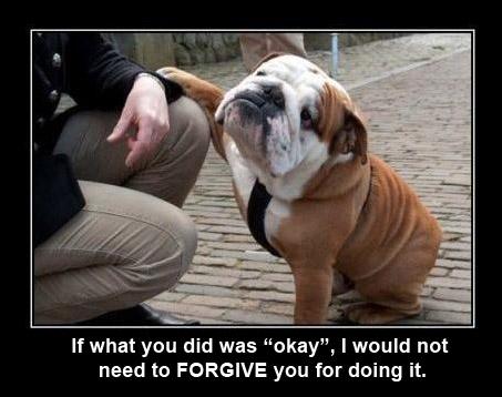 DOG Not okay, forgive