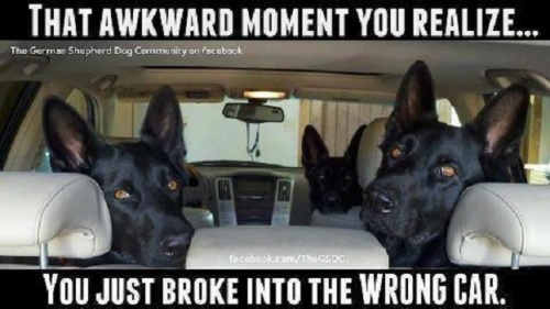 DOG That awkward moment