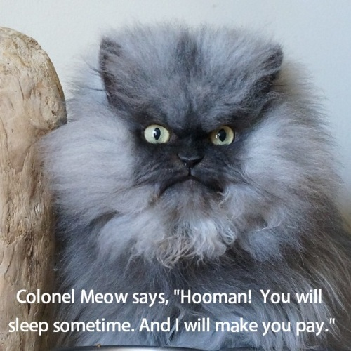 CAT Colonel Meow