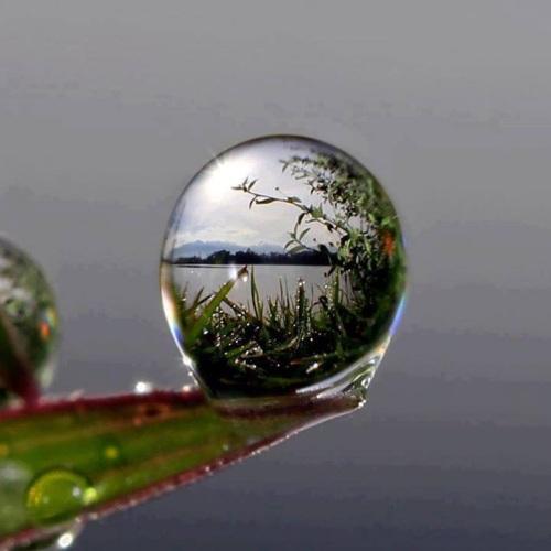 A world inside a drop of water