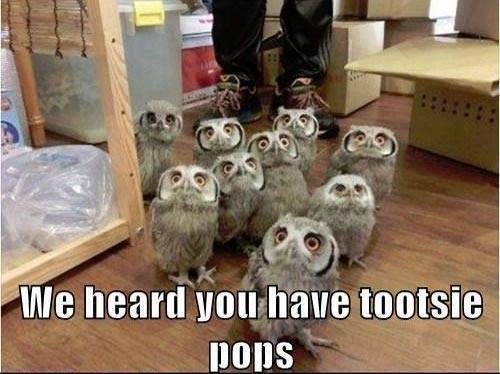 OWLS We heard you hav tootsie pops