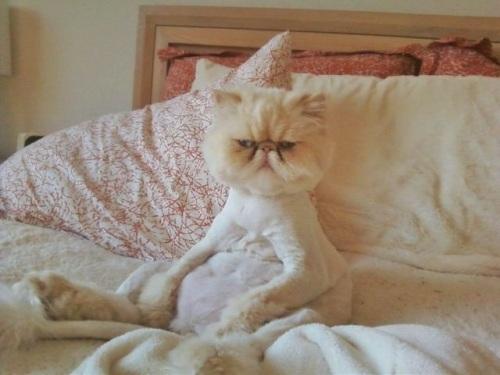 CAT bed grumpy