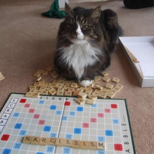 CAT SCRABBLE Narcissism