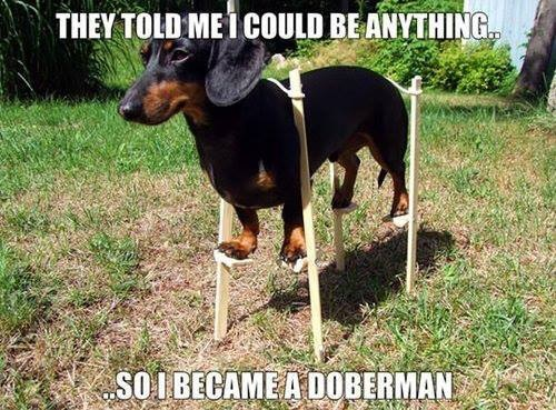 Halloween DOG Dreaming big