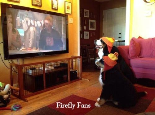 Halloween DOG Firefly fans
