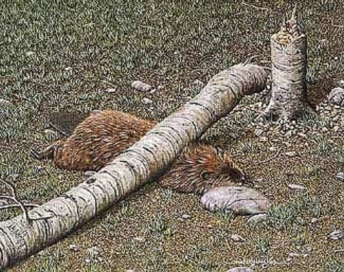 Beaver crushed by his own tree