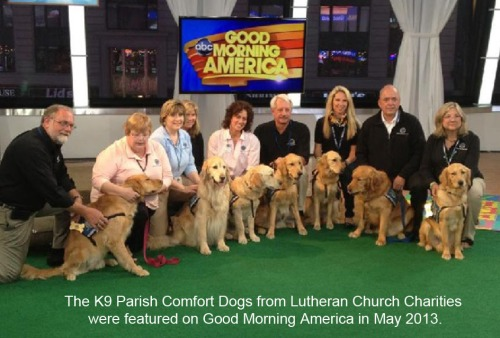 2013_05 Canine Comfort dogs on Good Morning America