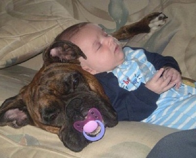 DOG BABY Sharing
