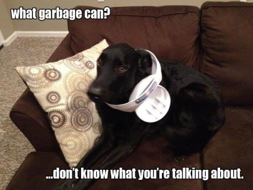 DOG What garbage can
