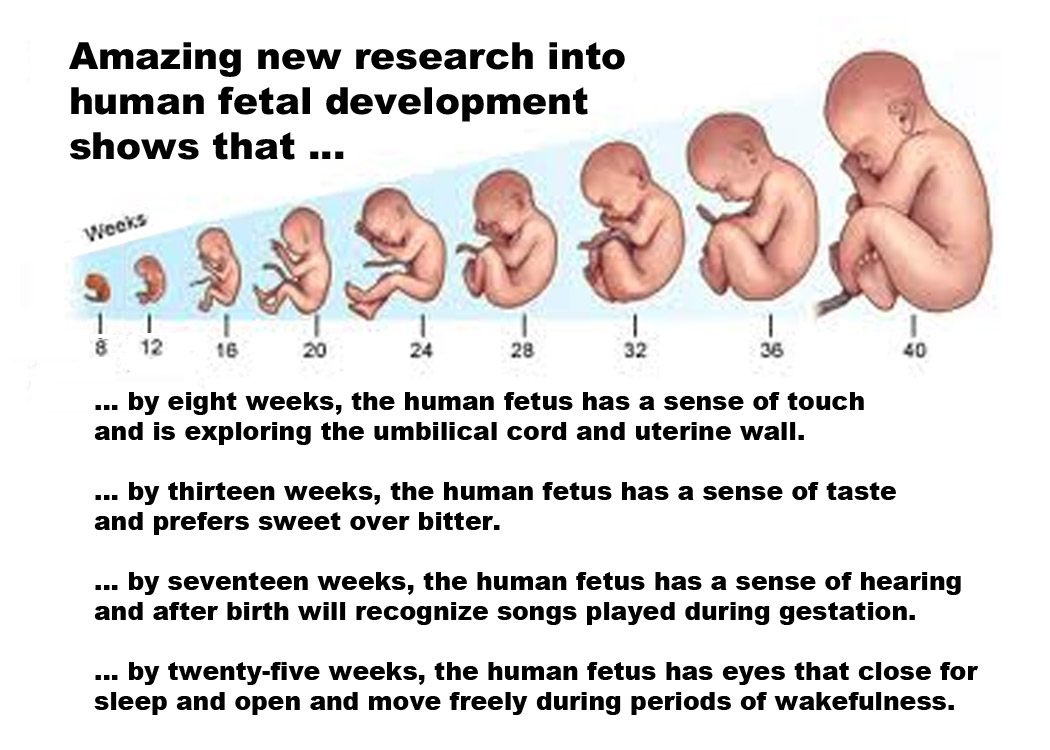 Amazing New Research Into Human Fetal Development