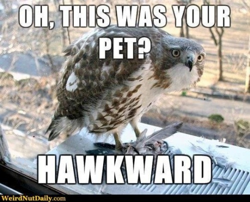 BIRD Oh this was your pet