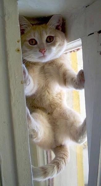 CAT stuck in window