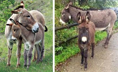 Donkey mama and baby
