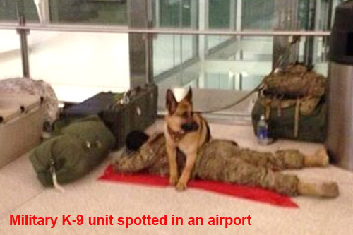K-9 unit spotted in airport
