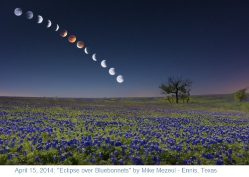 2014_04 15 Eclipse over Bluebonnets