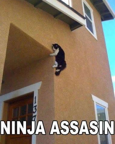 CAT Ninja Assassin