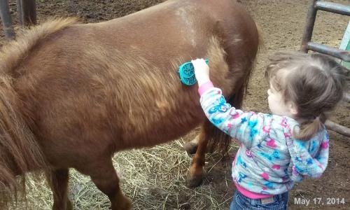 2014_05 17 Field trip - A brushed mini pony