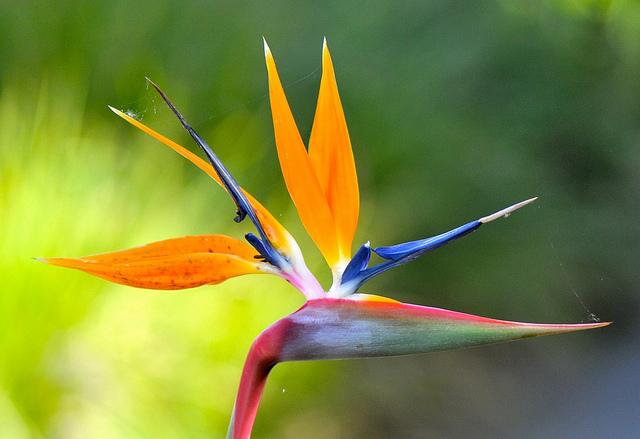 Hummingbird  instructablescom