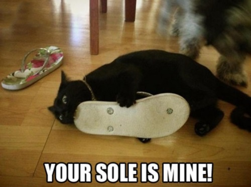 CAT Your sole is mine