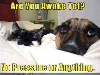 DOG CAT Awake yet
