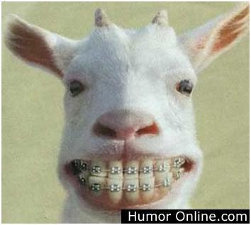 Funny_Animals5