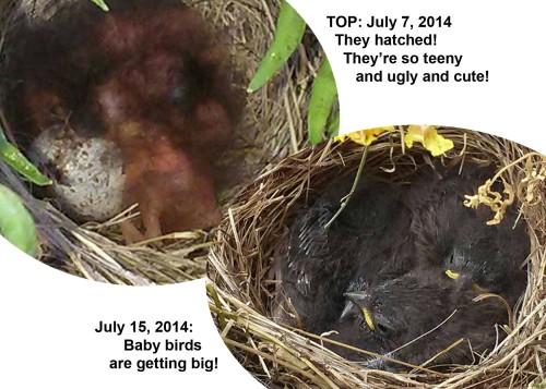 2014_07 07 Hatching