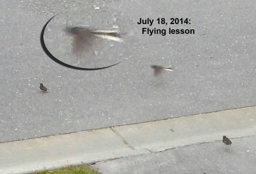 2014_07 18 Flying lesson