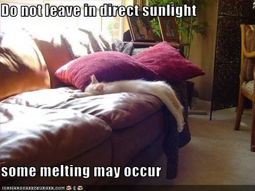 CAT melting - sent to Karen K