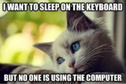 CAT Noone using puter