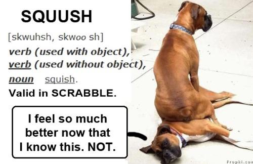 DOGS squush