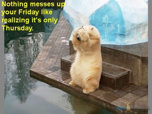 Funny-Animals-Nothing-messes-up-your-Friday-like-realizing-it-s-only-Thursday