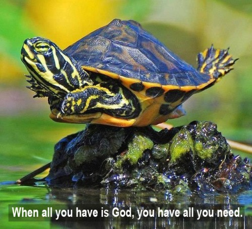 TURTLE When you have God