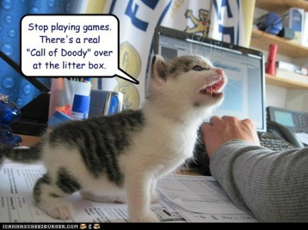 9d2b1_funny-cat-pictures-lolcats-stop-playing-games