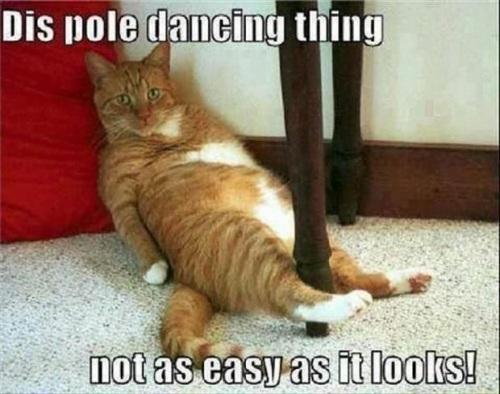 CAT pole dancing - PN - sent to Karen K Aug 10 2014
