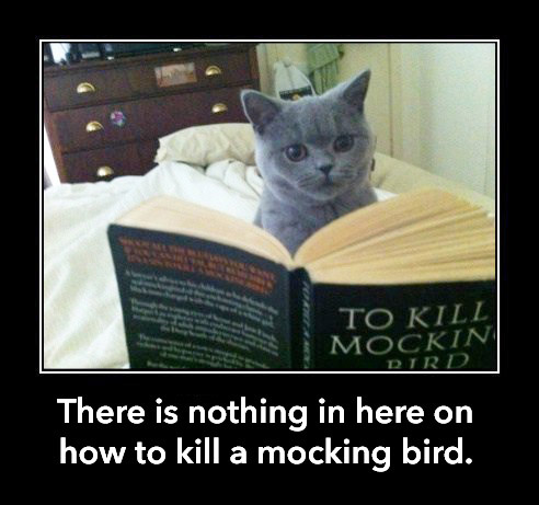 CAT To Kill a Mockingbird