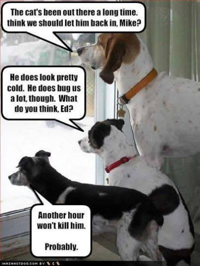 DOGS pondering letting cat in