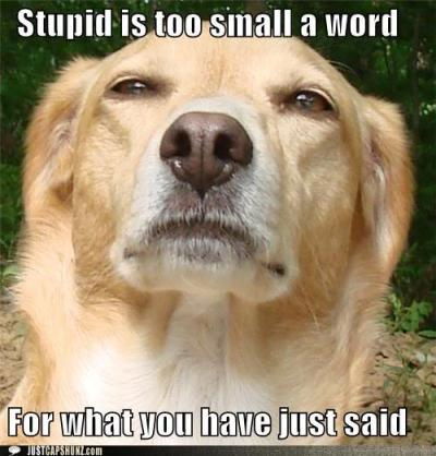 funny-captions-stupid-is-too-small-a-word-for-what-you-have-just-said